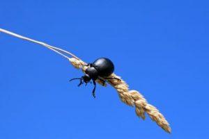 dachfenster insektenschutz